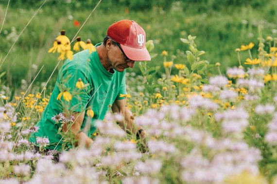 A man wearing glasses, a well-worn Nature Conservancy T-shirt, and a faded IU baseball hat, kneels amidst the grasses and blooms of the prairie to pull weeds. He is surrounded by plant life.