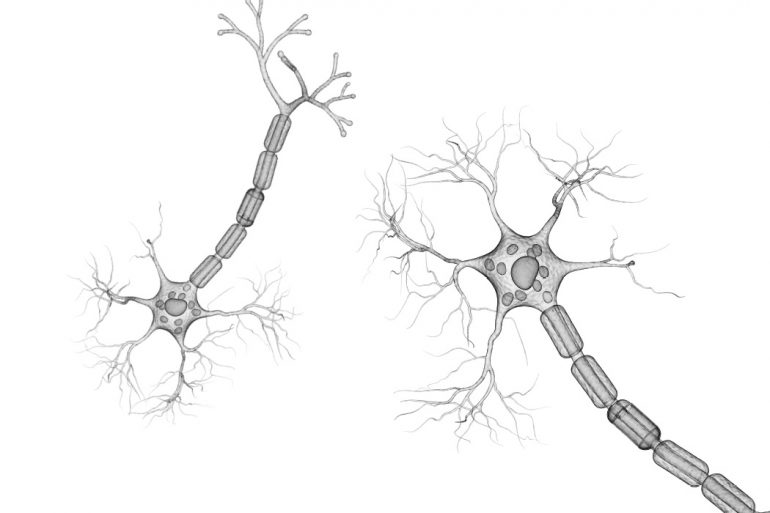Graphic contains detailed, grayscale illustrations of two nerve endings set against a white background.